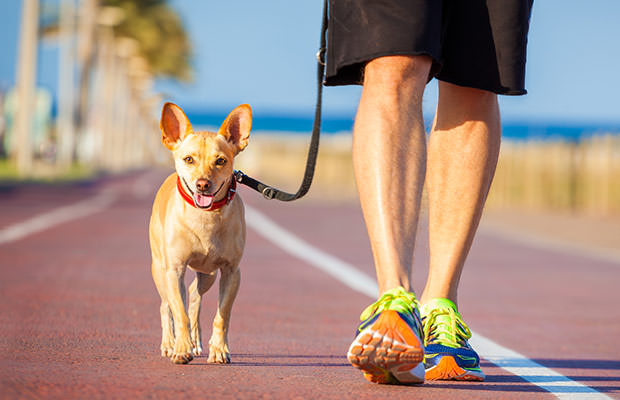 bigstock-Dog-And-Owner-Walking-92918423